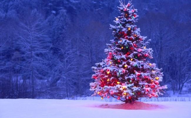 1-Decorated-Christmas-Tree