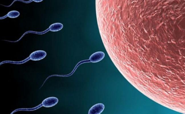 Sperm 1-Fullscreen capture 4282016 43743 PM
