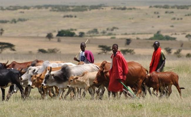 herdsmen-1024x549
