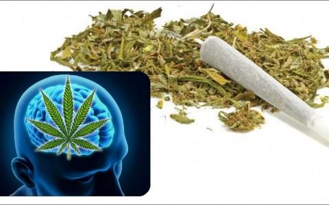 cannabis-to-brain